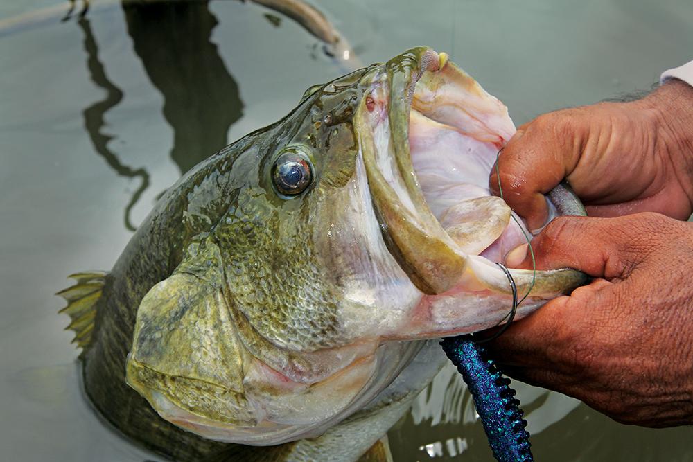 largemouthbassfishing.jpg